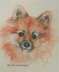 Promises Promises Pomeranian Pastel Drawing Dog Art By by terikor, $80.00