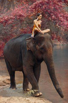 Asia - Elephant ride.