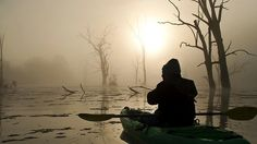 Early morning kayaking on River Murray Cool Countries, Countries Of The World, Murray River, Adelaide South Australia, Early Morning, Division, Kayaking, History, Country