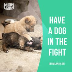 "English idiom that means ""to have an interest in the outcome of a situation"". Example: ""To be that strongly opposed to change, you must have a dog in the fight."" One of a series of ""Idiom Cards"" created by IdiomLand.com"