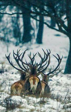 ~ A Woodland Walk ~