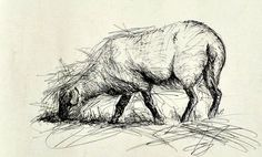 Biro Sheep drawing in the style of Henry Moore Animal Sketches, Animal Drawings, Pencil Drawings, My Drawings, Biro Art, Biro Drawing, Henry Moore Drawings, Sheep Pen, Sheep Drawing