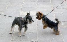 Restrains, Warsaw   Dogs, Warsaw Poland
