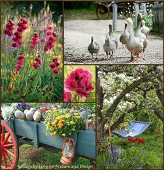 Farm charm everywhere the eye looks. Love for Nature and Design. Love Collage, Color Collage, Beautiful Collage, Collage Art, Collages, Origami, Bloom Where You Are Planted, Mood Colors, Photo Mosaic