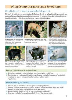podnebné pásy Země - Hledat Googlem Dogs, Animals, Animales, Animaux, Doggies, Animal, Animais, Dieren, Pet Dogs