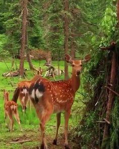 Public note Garden Animals, Forest Animals, Nature Animals, Cute Wild Animals, Cute Little Animals, Funny Animals, Wild Creatures, Woodland Creatures, Most Beautiful Animals