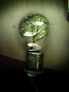 the bulb of nature. bulb of nature Bulb Photography, Photography Portfolio, Photography Ideas, Light Bulb Art, Robert Mapplethorpe, Off The Wall, Minimalist Art, Potpourri, Photo Manipulation
