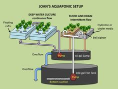 Aquaponics is especially a hybrid kind of farming that makes use of the breakdown of fish feces and fish feeds to nourish aquaponic plants. Description from aquaponicsplan.com. I searched for this on bing.com/images