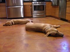 Stained concrete floors.  I thought the dogs added a nice touch!