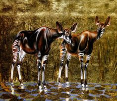 1923 1990 André Margat, Deux okapis, Two okapis Okapi, Most Beautiful Animals, Estilo Retro, Wildlife Art, Art Boards, Giraffe, Retro Vintage, Sketches, Ocean