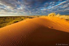 Kalagadi transfrontier park, South Africa