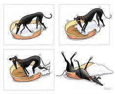Typical greyhound!