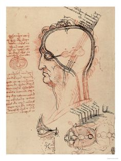 Head Section with the Anatomy of the Eye, Drawing, Royal Library, Windsor Giclee Print by Leonardo da Vinci at AllPosters.com