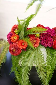 """I've decided that I really like the fern """"brainflower"""" combo for a container garden.  The brainflower stuff would be so pretty in window boxes too."""