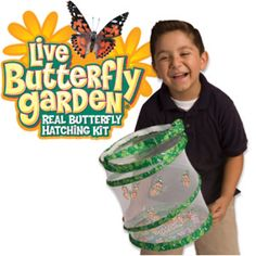 Butterfly garden. It comes with everything you need (caterpillars too) to start the garden. I found it on insectlore.com.