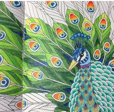 Animal Kingdom Colouring Book Snail