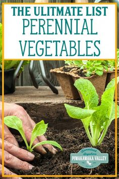 100 Perennial Vegetables For your Garden : Are you looking at growing a food forest? or a vegetable garden? or just wanting to be more self sufficient? Here are some delicious perennial vegetables you can grow in your garden. Sow once and eat forever! Perennial Vegetables, Planting Vegetables, Planting Seeds, Growing Vegetables, Gardening Supplies, Gardening Tools Names, Gardening Tips, Backyard Vegetable Gardens, Garden Soil