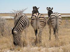 Partielles Desinteressse, via Flickr. My Heritage, Animals, National Forest, Animales, Animaux, Animal, Animais