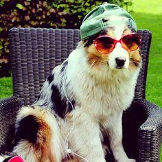 Sunny days  #eefmodeldog #eeftheaustralianshepherd #Sterresmodelinspiration #sterregoesparsonsny