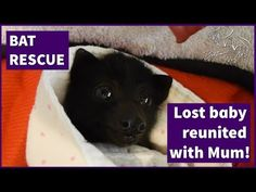 Reuniting a lost baby bat with her mother - YouTube