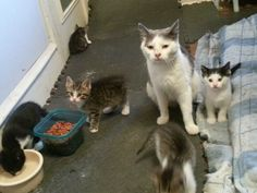 Two Brothers Feed a Fearful Feral Cat, Months Later, She Brings Her Babies to Meet Them Kittens Cutest, Cats And Kittens, Found Cat, F2 Savannah Cat, Munchkin Cat, Cat Tags, Feral Cats, Two Brothers, Cat Crafts