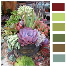 Great Fathers Day color pallet to use with succulents.