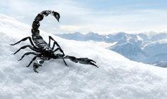 black (=difficulte) pistes are called Black Scorpions . very difficult pistes! Photos, Pictures, Paintings, Black, Art, Vacation, Travel, Paint, Black People