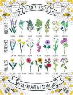 Plantemos esto en nuestros jardines, terrazas y balcones para evitar que las abejas se extingan.