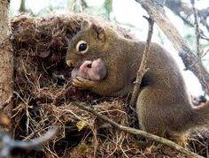 Resultado de imagen para animales salvajes bebes tiernos