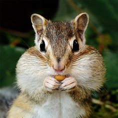 How to (HUMANELY) get rid of chipmunks in your yard and garden