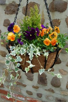 Gorgeous Flower Hanging Garden For Spring 07 Winter Hanging Baskets, Plants For Hanging Baskets, Hanging Flowers, Winter Plants, Winter Flowers, Winter Garden, Fall Containers, Spring Flowering Bulbs, Ivy Plants