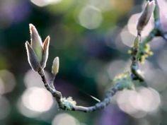Spring in VanDusen Garden, Vancouver BC Canada Planning a farm garden A co… Farm Gardens, Small Gardens, Cottage Gardens, Summer Flowers, Colorful Flowers, Little Land, Vancouver Bc Canada, Spring Garden, Clematis