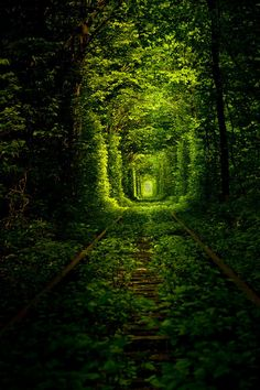 Tunnel of Love ~ Roughly 7 km from the city of Klevan, Ukraine, a train transporting wood to the nearby fiberboard factory runs 3 times daily, forming the overhanging trees into an enchanting natural tunnel. The 3-km tracks make a lovely stroll. The tunnel is most lush during the spring & summer, but colorful fall foliage & snow-covered winter branches are also captivating. I want to run here