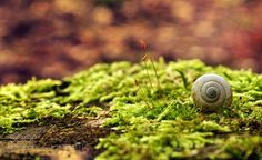 Snail shell in forest