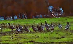 Wild Turkey Landing