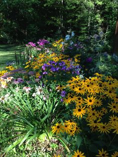 My perennial bed that receives afternoon sun.  Annabelle Hydrangeas border the foundation of the house.  In this garden, I have glove thistle, daisy, black eyed susan, daylily, liatris, coneflower, phlox and sedum.