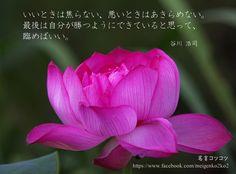 いいときは焦らない、悪いときはあきらめない。 最後は自分が勝つようにできていると思って、臨めばいい。 谷川 浩司