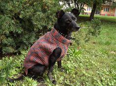Dog Sweater Hand Knit / greyhound sweater Custom by PepperPetWear Hand Knitted Sweaters, Dog Sweaters, Hand Knitting, Custom Made, Mary, Hands, Dogs, Pet Dogs, Doggies