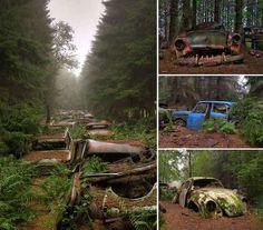 cimetière voiture pleine nature casse