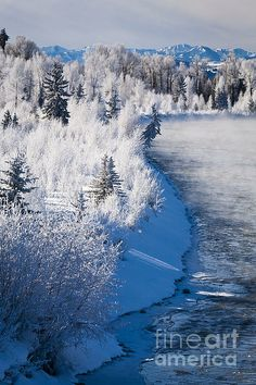 Frosted Trees Along The Snake River , Grand Teton National Park, WY, USA