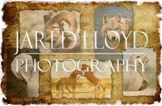 Jared Lloyd Photography | Workshops, Education, Wildlife
