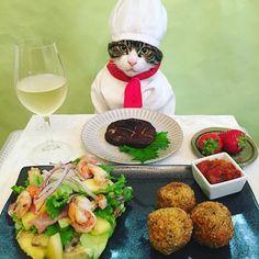 Croquette,Garlic shrimp salad,Shiitake mushroom steak #cat#cats#catstagram#catsofinstagram #sweetcatclub#instacat_models#bestmeow #instacat_meows#chef#シェフ#food#wine #ねこ#ニャンスタグラム#にゃんこ#みんねこ #猫#コロッケ#ガーリックシュリンプサラダ #しいたけのステーキ#いちご#mannishboys #斉藤和義#zip写真部