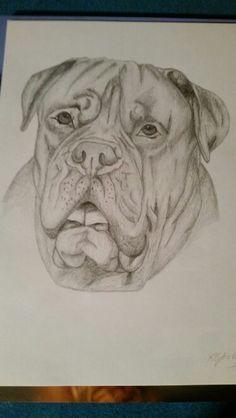Dog de Bordeaux art
