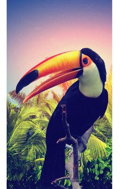 Toucan Surf, Toco Toucan, Birds In The Sky, Tropical Pattern, Exotic Birds, Tropical Plants, Summer Colors, Beautiful Birds, Beautiful Creatures