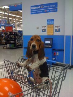14 Signs You Are A Crazy Basset Hound Person