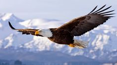 All types of eagle birds in the world with amazing facts. Eagles are some of the largest birds. They are at the top of the food chain, with some species feeding on big prey like monkeys and sloths. The Eagles, Wings Like Eagles, Bald Eagles, Spirit Animal Quiz, Whats Your Spirit Animal, Eagle Images, Eagle Pictures, Funny Pictures, Lion Noir