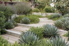 Bush Garden, Dry Garden, Garden Beds, House Landscape, Landscape Design, Garden Design, Beach Gardens, Outdoor Gardens, Modern Planting