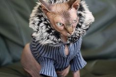 Sphynx cat wearing outfit/ costume #hairless