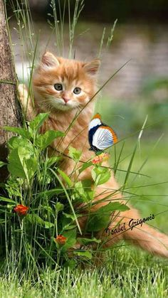 Gato amoroso