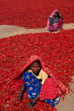 Photo: Les piments rouges ,Inde (The red chili peppers, India )   #people #women  #street  #streetphotography  #outside #red #chilipeppers #drying #photography  #amazing  #colors  #india  #world